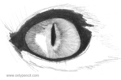 Drawing Realistic Cat Eyes