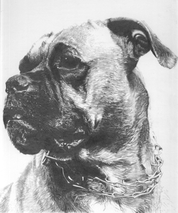Boxer Pencil Drawing
