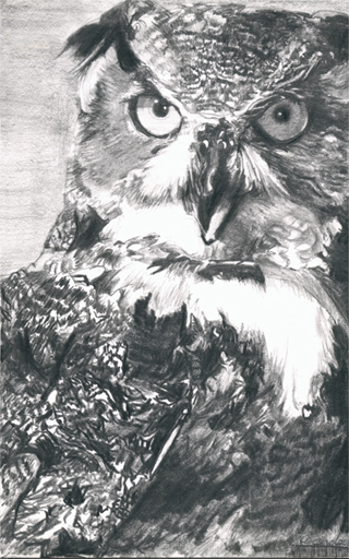Horned Owl Pencil Drawing