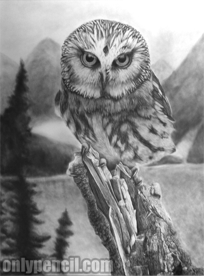 Saw-Whet Owl Pencil Drawing