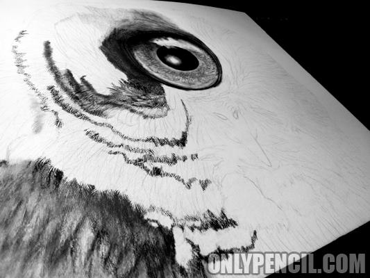 Evolution: Great Gray Owl Pencil Drawing