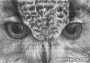 ACEO Eagle Owl Eye