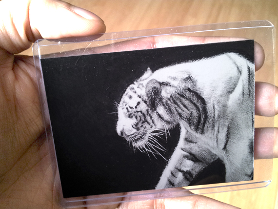 ACEO White Tiger Pencil Drawing