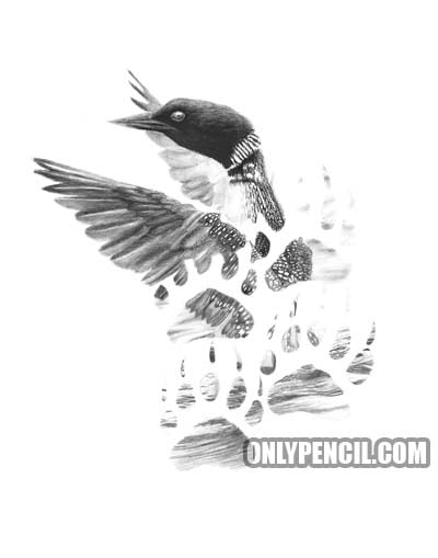 Tattoo Loon Pencil Drawing