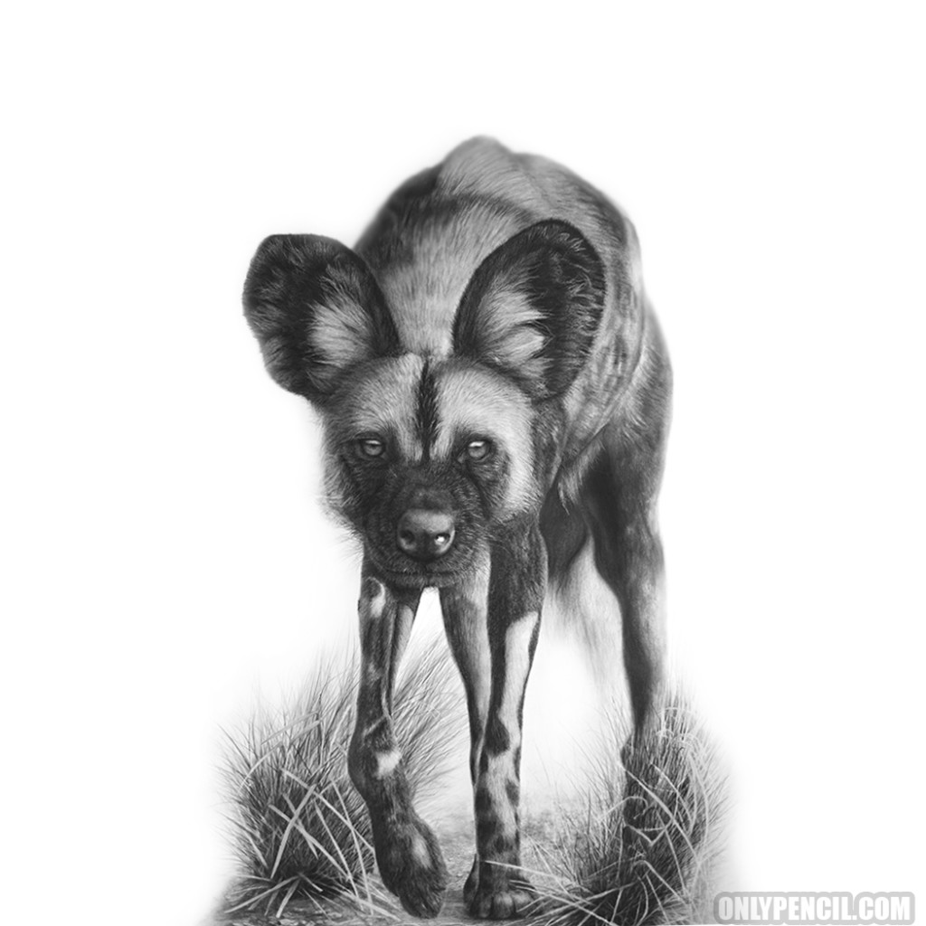 African Wild Dog Pencil Drawing